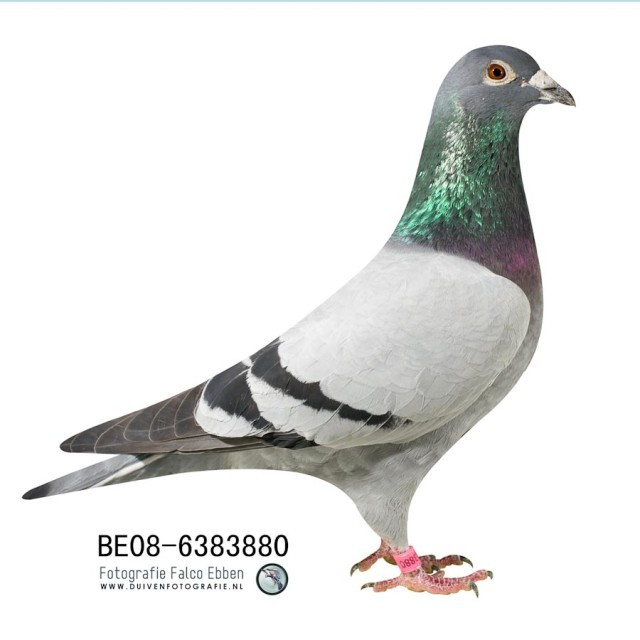 BE08-6383880