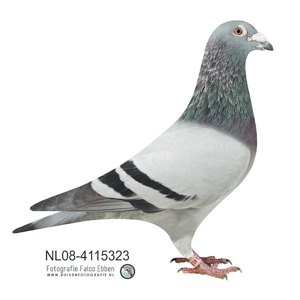 NL08-4115323_589
